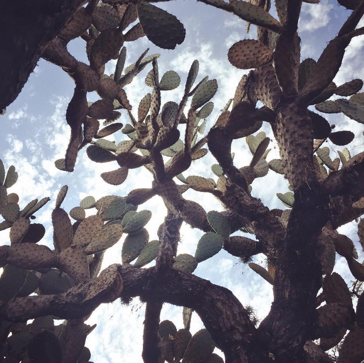"""""""A Song on the Road"""" / Una postal de San Miguel de Allende"""